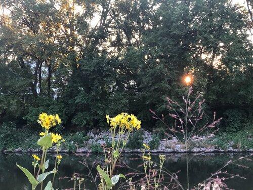 Like Wildflowers, pt. 2